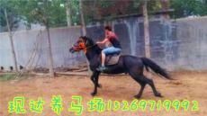 哪里有卖骑乘马的