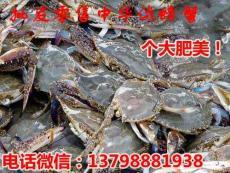 汝城桂东水产市场中华螃蟹价格