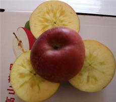 昭通蘋果 丑蘋果 冰糖心蘋果