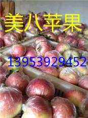 誠信代收優質嘎拉美八蘋果黃金梨