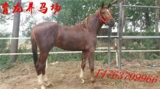 四川哪里有卖马的四川养马场在哪