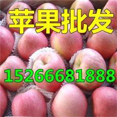 山东苹果价格行情今日红星红将军红富士产地