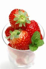 成都草莓苗基地哪家好/成都草莓苗基地哪有