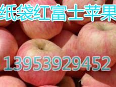 山東紙袋紅富士蘋果產地紅富士蘋果批發價格