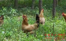 云南文山私人定制农场出租 农家乐生态园