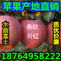 批发红富士苹果哪里便宜山东苹果价格哪里低