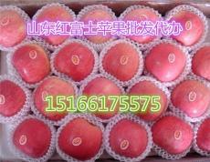 中国各地红富士苹果批发价格网 苹果批发