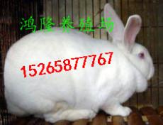 2018农村发展养殖兔子肉兔养殖加盟