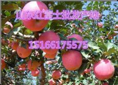 山东红富士苹果批发 供应山东红富士价格