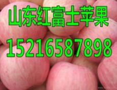 山东红富士苹果产地销售价格行情