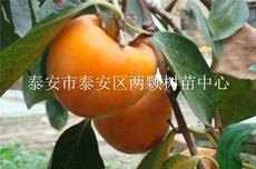 牛心柿柿子苗
