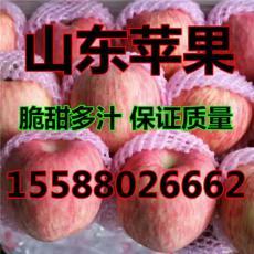 今日紅富士蘋果產地跌價銷售