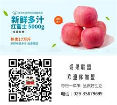 陜西紅富士蘋果優質客商供應誠招代理產地直