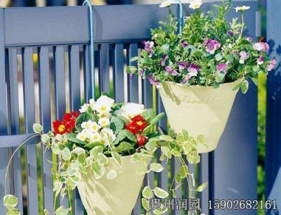 贵阳室内植物景观设计单位批发的壁挂花盆