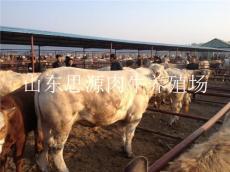 邯郸西门塔尔肉牛犊 西门塔尔牛牛犊价格