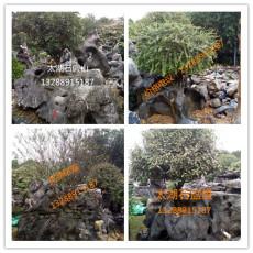 广东太湖石盆景 庭院景观石 大型太湖石盆景